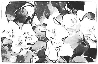 Then a more intense mono in PicSketch.