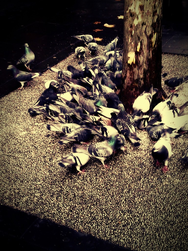 Feeding frenzy. PicturesLab. Three views.
