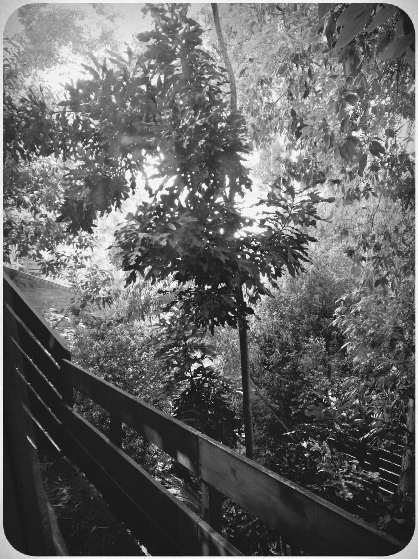 FhotBWRES-Garden6.jpg