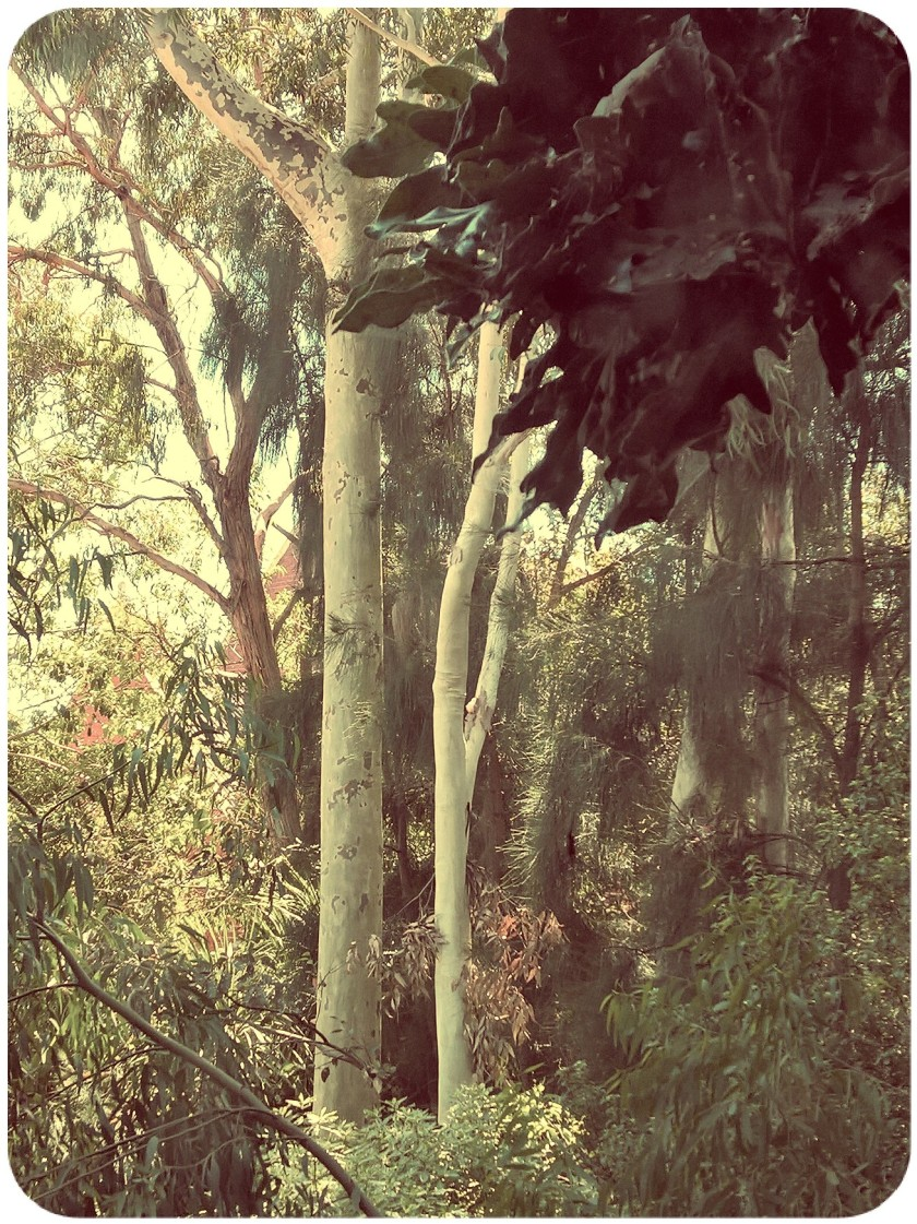 FhotPixlrRES-Garden4.jpg