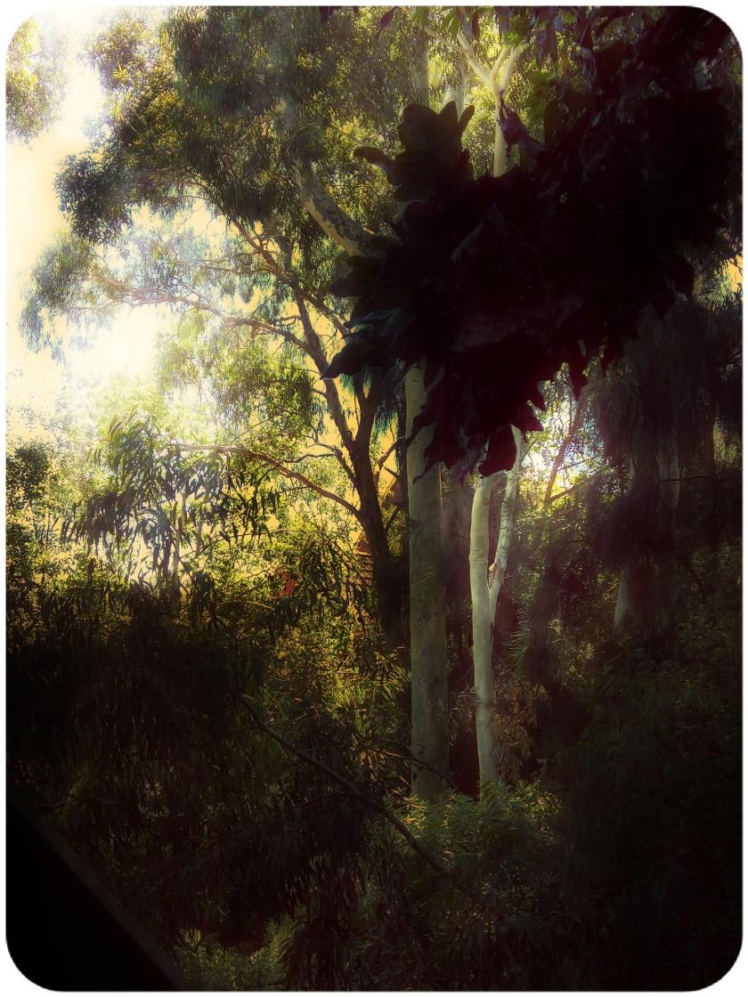 FhotPixlrRES-Garden5.jpg