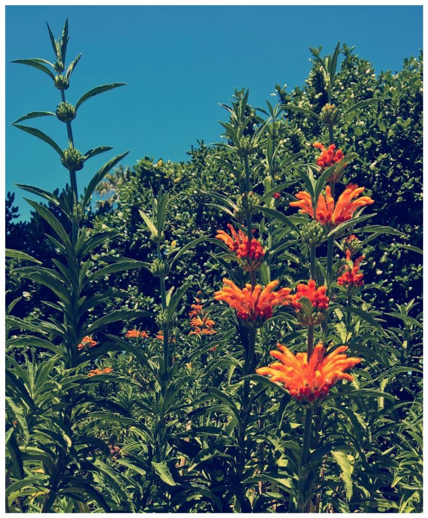 FhotRES-OrangeFlwrsBor