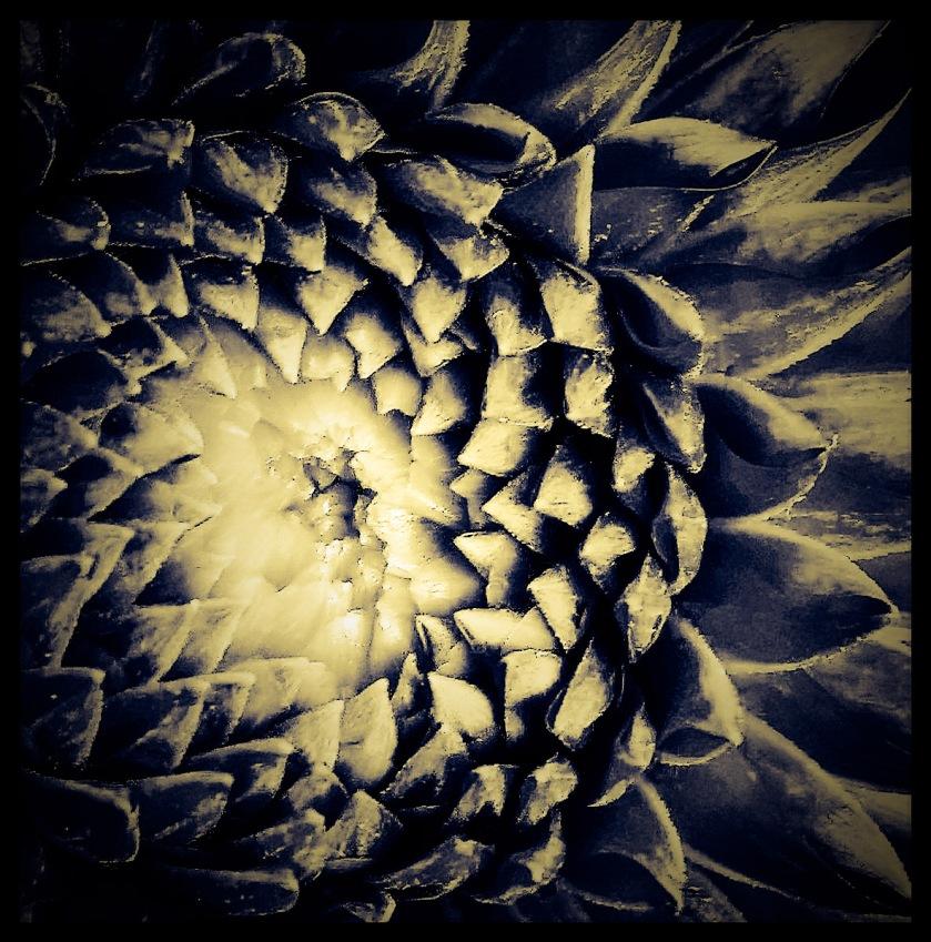 AdobePhotoshopExpress_8ad1715659bb48aaae0001e9af06e18d